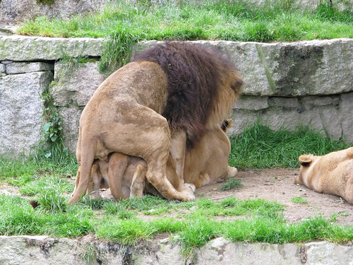 zoo sex com