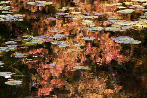 Houghton's Pond Swamp