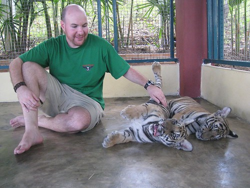 Charming a tiger cub into submission