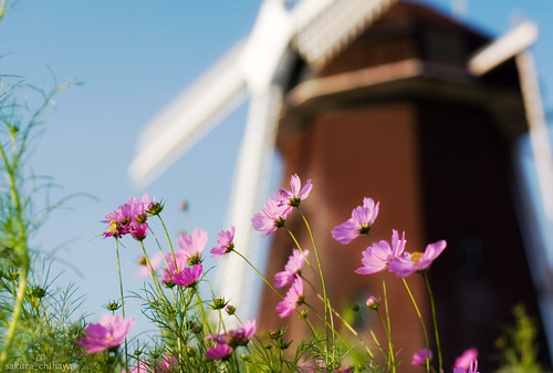 6003 : cosmos2008 #8 -with Windmill-