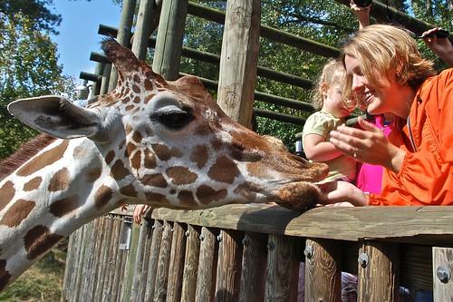 Marla feeding giraffe