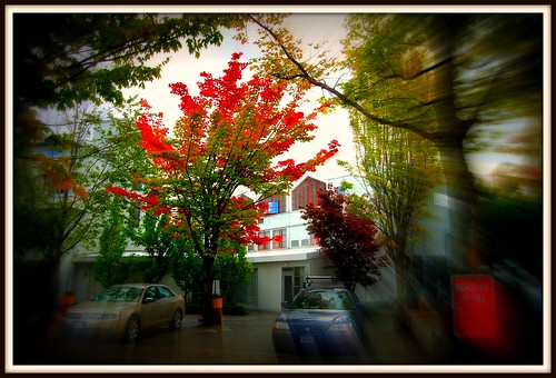 fall scene with tree and cars in motion