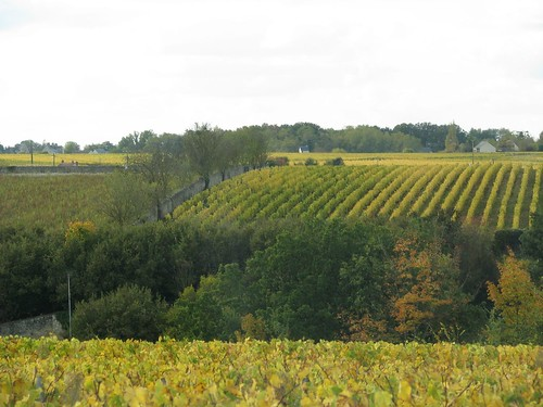 Vouvray vineyards