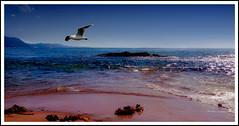 Morning Reconnaissance (greigor) Tags: ocean nature water birds apartments seascapes environment tidal australiana