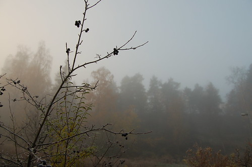 morning fog