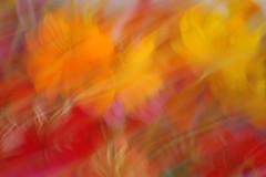 Flowers for Sale? (mark willocks) Tags: flowers arizona blur phoenix colorful nikond50 thefarm cameramotion upcoming:event=981998