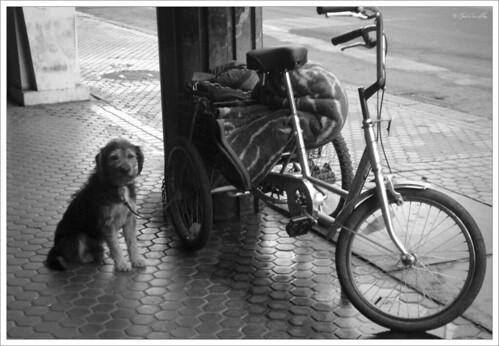El perro triste del mendigo de la calle Imagen