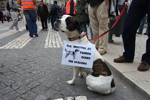 Manifestação de professores #14