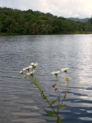 flowers and the lake (Raquel Cáceres Melo) Tags: lake lago cavernas montanha grutas intervales flres parqueestadualdeintervales grutasintervales birdwatchingintervales