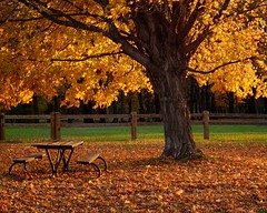 Last Picnic (Shauna Sechrist) Tags: autumn leaves fallcolor ruralohio berlinlake berlincenterohio multimegashot cccunanimous