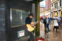 Rainy Day, 12 String Guitarist With Norfolk Lurcher
