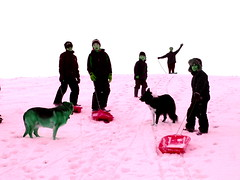 pink snow (moymackay) Tags: birthday winter snow beach boys jumping sand fife dunes east saul gullane lothian sledging eirinn hendos williamhope