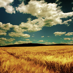 ~ into the great wide open ~ (~ Pixel Passion ~) Tags: blue autumn summer white mountains nature field yellow clouds canon landscape eos freedom corn scenery mood moody open natural wind great wide meadow free atmosphere windy hills atmospheric summerbreeze