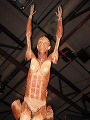 bodyworlds-67.JPG (T bias) Tags: museum exhibit science bodyworlds cadaver plastination beefjerkey