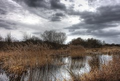 England: Northamptonshire Wetlands - Overcast Beauty (Tim Blessed) Tags: uk trees sky water clouds reeds wetlands marsh soe mywinners abigfave avision excellentphotographerawards singlerawtonemapped betterthangood theperfectphotographer happinessconservancy