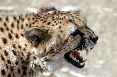 Monday Madness.....! (Connie Lemperle) Tags: explore karma animalplanet cincinnatizoo animaladdiction animalkingdomelite anawesomeshot lemperleconnie allrightsreserved elpasojoesplace ohiozoos zoosaroundtheworld
