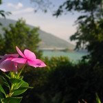 Flower Sea Thailand Island