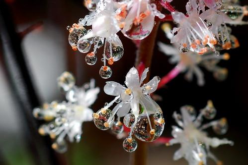 crop of drops