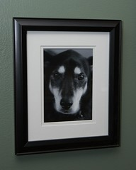 Dear Old J.J. (Daniel Greene) Tags: dog home project jj photograph framing