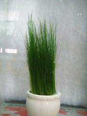 Thủy Sinh Tuấn Anh-Chuyên cây & Rêu Thủy Sinh, Cá Cảnh Biền & Hồ Cá Cảnh Biển - 21