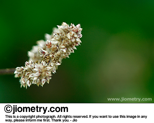 Flowery white stem