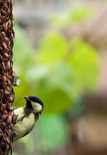 birdnuts_7982