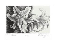 Two Lilies drypoint (wingedlion) Tags: original art floral printmaking drypoint wingedlion nataliamoroz