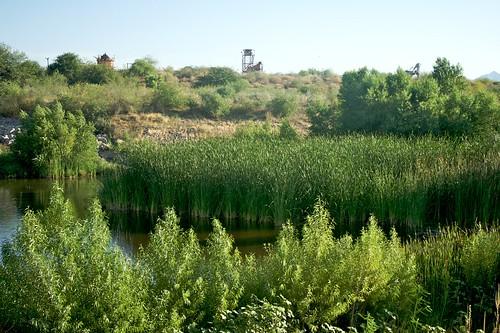 Rio Salado Habitat Restoration Project, landscape
