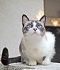 smiling Cee Cee the Great (tallship80) Tags: cats gatos felines excellence yougotit plus4 bestofcats plus4excellence invitedphotosonlyplus4