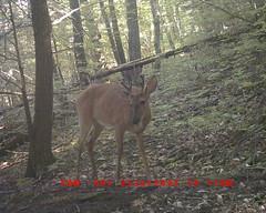 DGC_0020 6-pt Buck