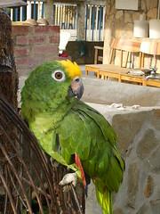 mi loro panchito (alexferr96) Tags: verde alex cachorros loro perritos 96 nty