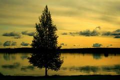 Rovaniemi, Finland (Northern_Night_Sky) Tags: trees sky clouds reflections finland dusk rovaniemi naturesfinest abigfave anawesomeshot superaplus aplusphoto goldstaraward damniwishidtakenthat