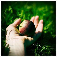Forbidden Fruit (Jo Bradford) Tags: eve apple paradiselost sin eden lust milton temptation jobradford greenislandstudios