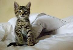 henderson (lesbru) Tags: cat tabby stripy moggie 18200mm d40x