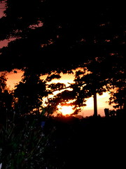 Apollo's fiery chariot yada yada yada (aka Sunset through trees II) (Catch My Fancy) Tags: trees light sunset red orange sun tree silhouette yellow landscape gold evening twilight hill silhouettes glorious fiery urbanlandscape gloaming