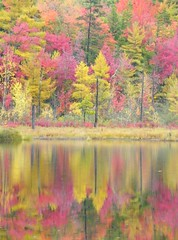 Fantasy Forest (Stanley Zimny) Tags: park pink autumn trees reflection tree green fall nature water colors leaves yellow automne catchycolors leaf colorful colours seasons natural fallcolors newhampshire nh autumncolors fourseasons reflexions autumnal colorexplosion 4seasons northconway colorphotoaward saariysqualitypictures puddingpond