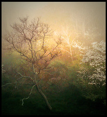 A mystical morning (Amy V. Miller) Tags: morning mist mountain west tree nature fog spring dogwood vriginia flickrsbest platinumphoto theunforgettablepictures thebestofflickrsbest theawardtree