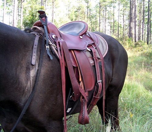 Aussie saddles and Gaited horses - Chronicle Forums