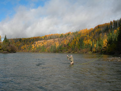 River Right (moldychum) Tags: flyfishing spey