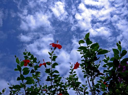 Flores contra el cielo