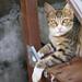 _E5E2872 作者 Cat Scape的KT