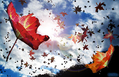 Falling Leaves (rcvernors) Tags: blue autumn red sky white tree art leaves silhouette clouds photoshop lens flying leaf colorful bright digitalart windy falling computerart flare backlit soe aw allrightsreserved photoshopart bigmomma rcvernors altereduniverse thumbsupchallenges thechallengefactory