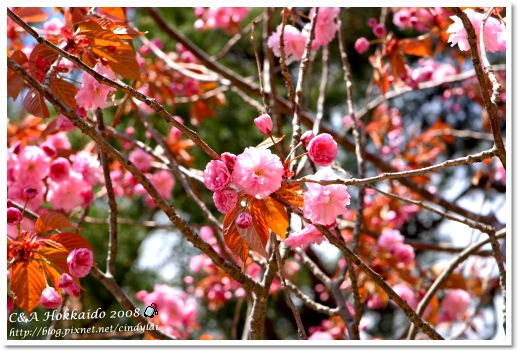 Hokkaido_2081