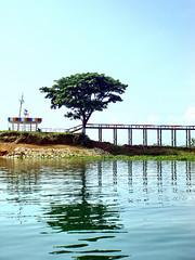 Bridge to Terabithia (Mayabi) Tags: sony cybershot sonycybershot t20 dsct20 mayabi