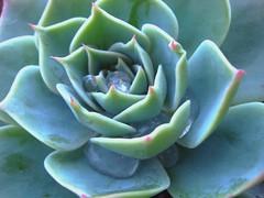 Plant (Elanorya) Tags: verde casa natura terra acqua pioggia aria pianta gocce