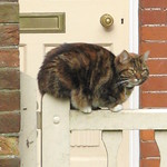 Cat on a fence, Tunbridge Wells thumbnail