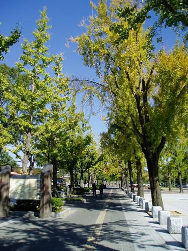 你拍攝的 姬路街道。