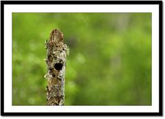 Shelter (Z.Faisal) Tags: green bird nature rain station river nikon nest nikkor shelter bangladesh bangla faisal desh d300 zamir khulna sundarban zamiruddin zamiruddinfaisal kalagachi kholpetua kalagachistation kholpetuariver zfaisal