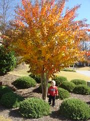 Fire tree!