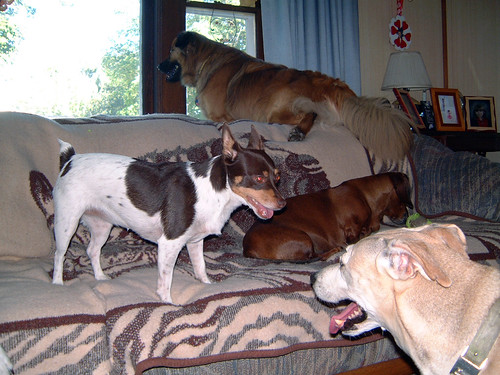 2006-09-19 - DogTimesFive-0034